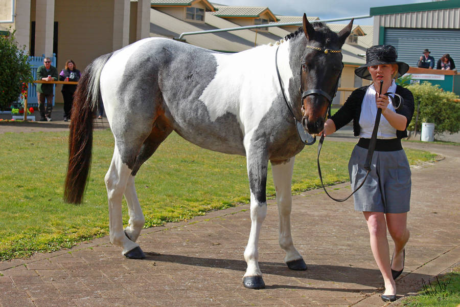Seal Brown Roan Tobiano 2 by Sooty-Bunnie