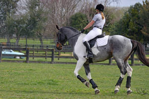 Seal Brown Roan Tobiano 3 by Sooty-Bunnie
