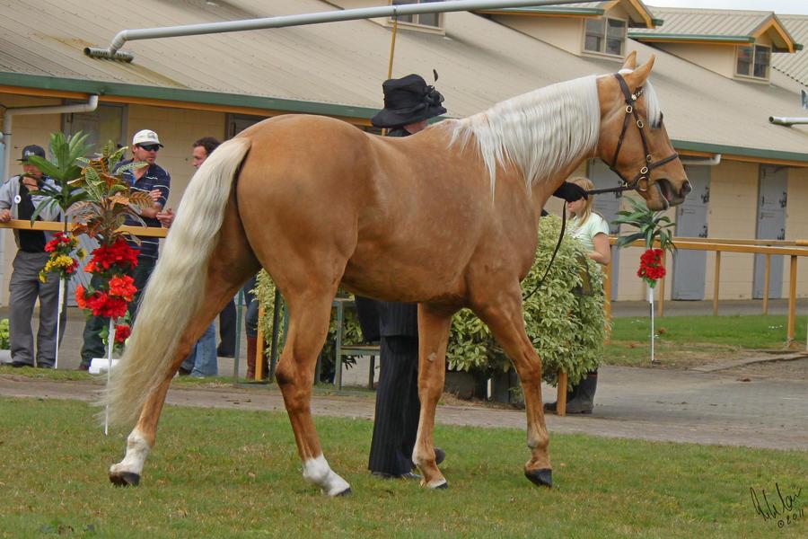 Palomino Stallion by Sooty-Bunnie