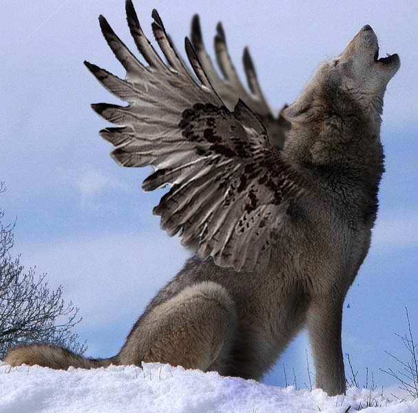 Winged Wolf By Angiemyst On Deviantart