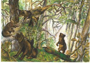 Misie - Bears