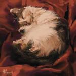 The Cosy Cat