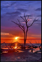 Sunset for a tree by xAgNO3x