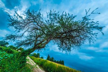 The Life Tree by xAgNO3x