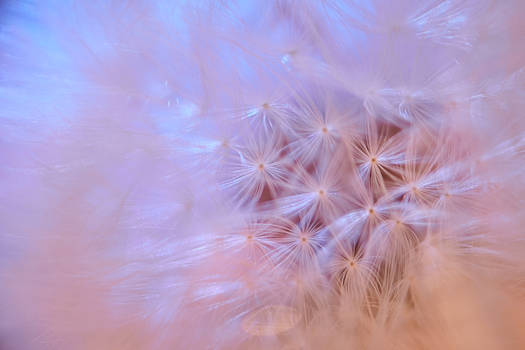 Flor de la Vida