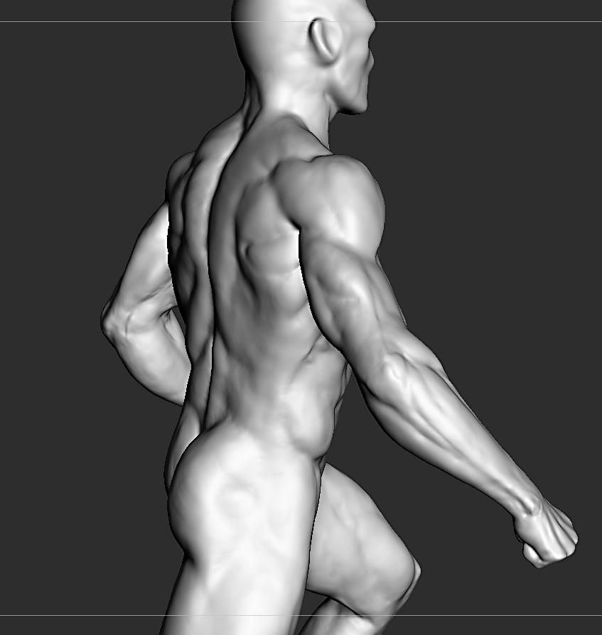 anatomy wip by rinozvizdic