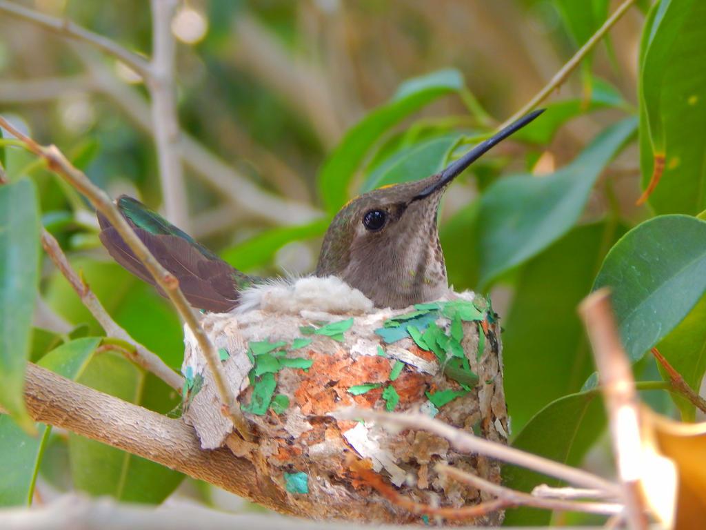 Madre colibri by Worldboy1