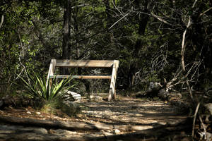 Wild Basin Bench by PhillyPuddy