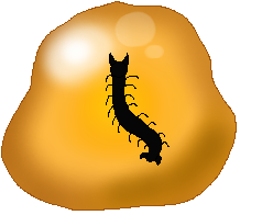 Centipede Amber (CoC Fossil) by Dianamond