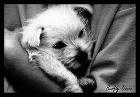 Puppy Hug by BarflyDance