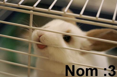 Nom :3 by FlamingXHorizonXJuni