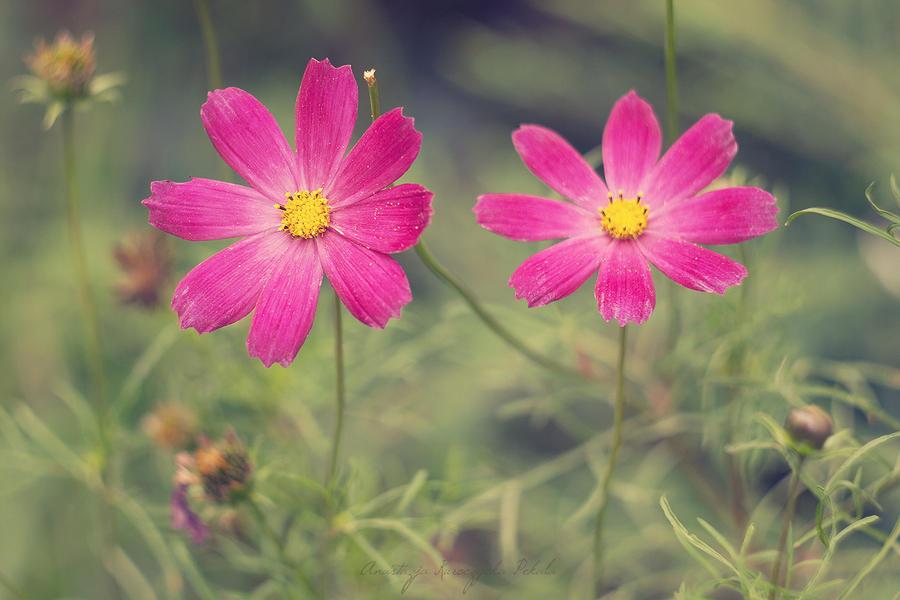 Flowers by anakurpek