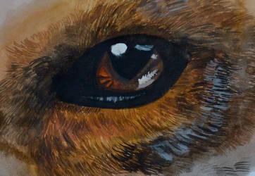 Eye of fox by SHADE-LJ
