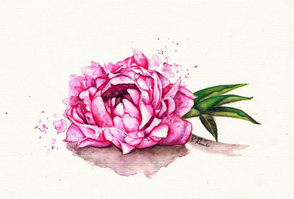 Pink Peony by B-Keks