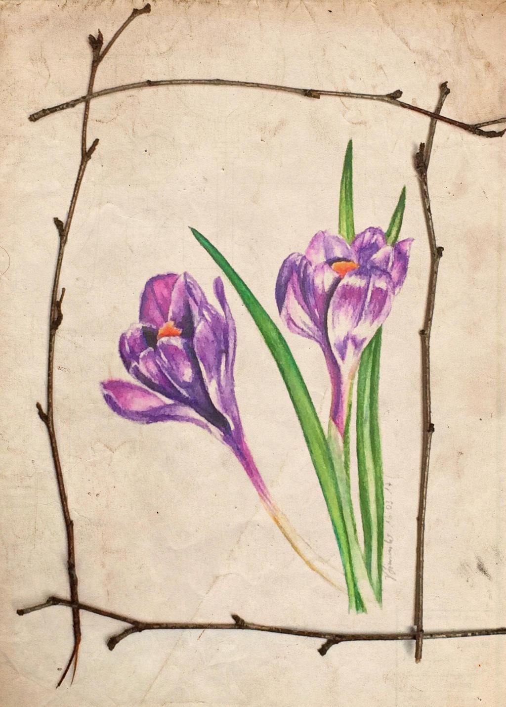 spring time by B-Keks