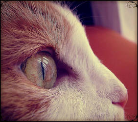 Cat. by merliner