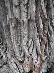 Tree bark stock