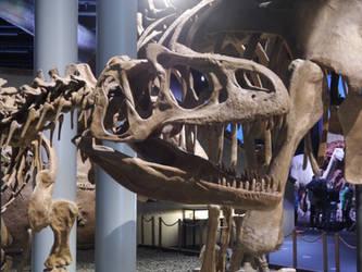 Allosaurus skull by kosmonauttihai