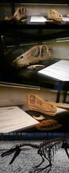 Deinonychus and Velociraptor by kosmonauttihai