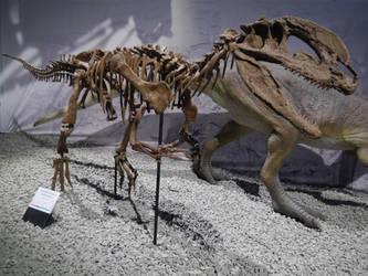 Dilophosaurus skeleton by kosmonauttihai