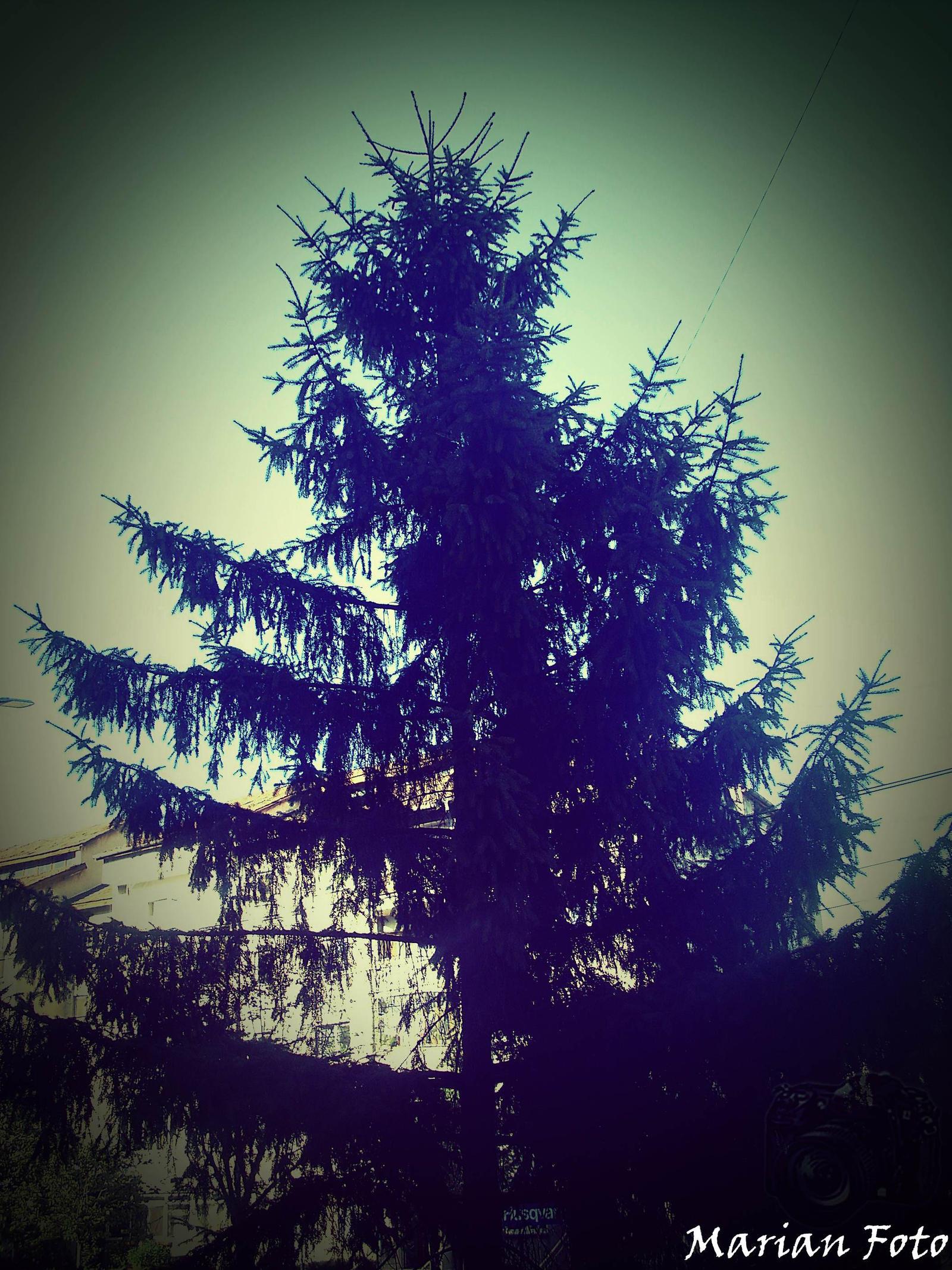 Big Tree by mmariang