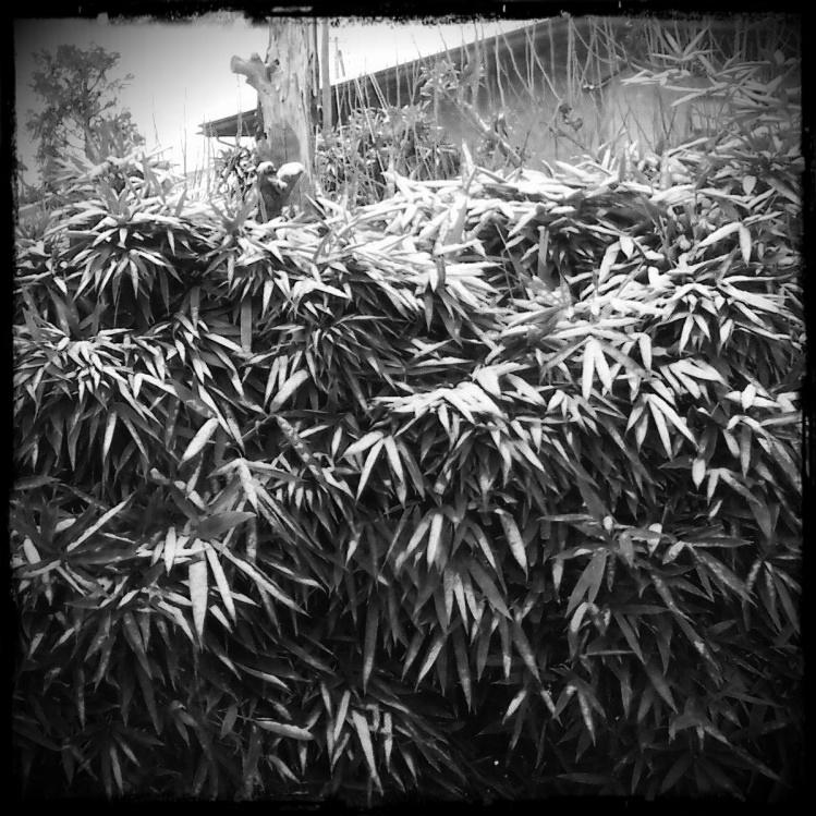 Kozasa leafs::: by aopan