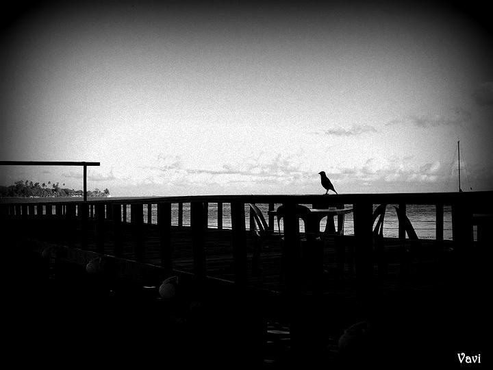Bird's shadow - Black and white version by Vavi-Z
