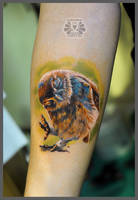 funny owl by Karviniya