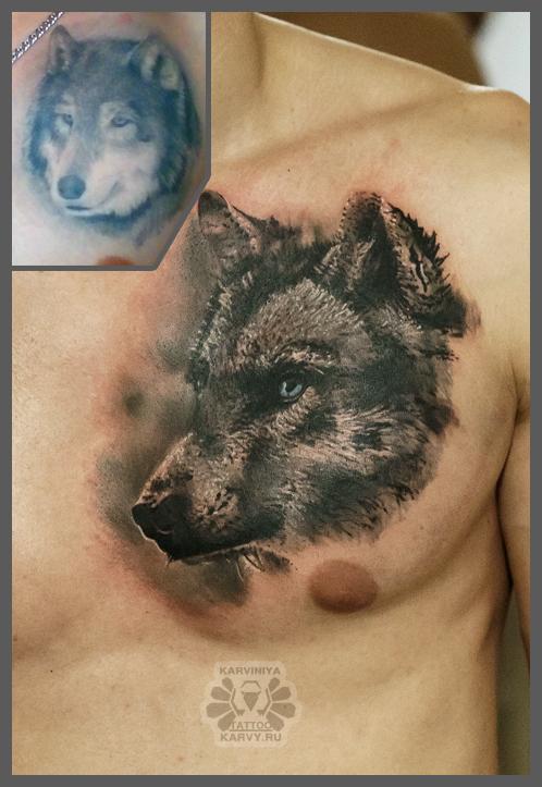 wolf's cover by Karviniya