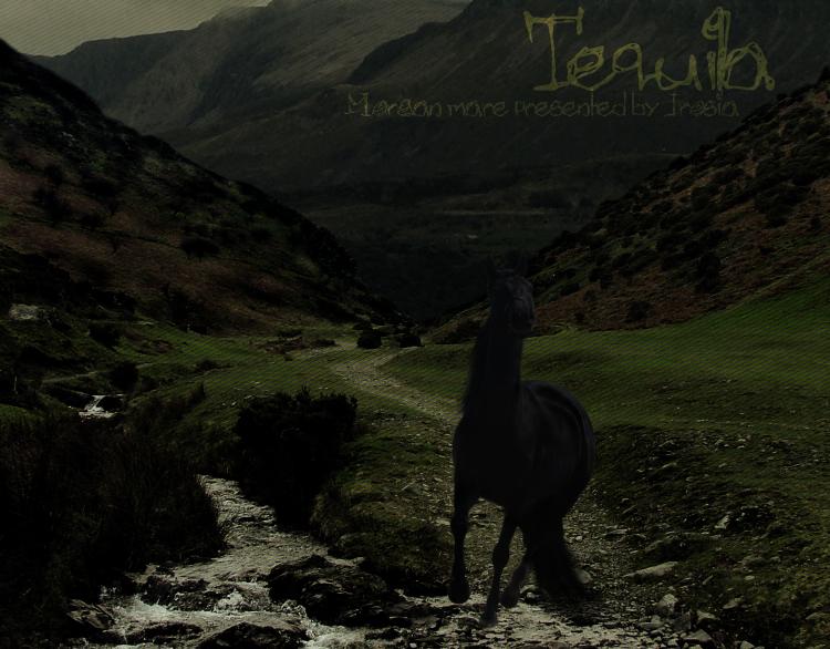 ^ Twilightstars ^ horses 377f9c9a2ed46c4840677b50c04aa74b