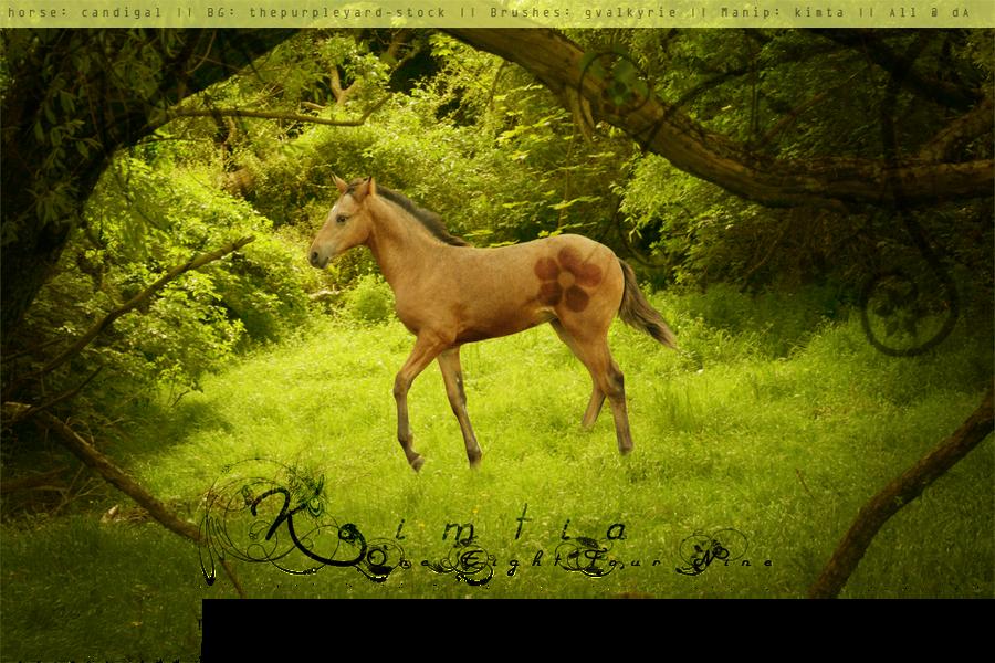 Foal Layout by kimtia
