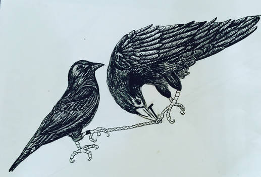 The Jackdaw and the Raven