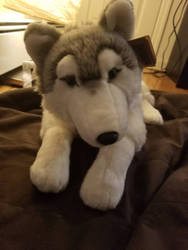 Living Nature Large Husky Plush by sparkskull789