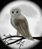 Barn Owl by Eclipsew01f
