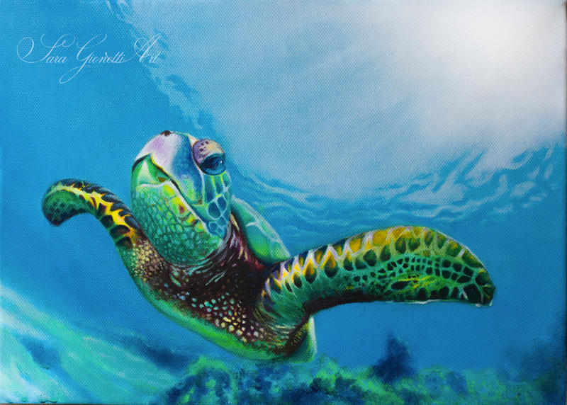 Turtle - Oil on Canvas by Gionetti