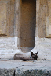 The Church Cat by Noemy009