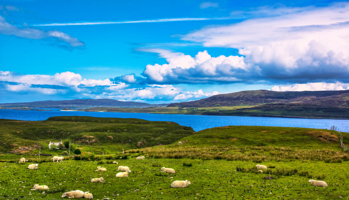 Sheep overlooking the Isle of Skye, Scotland by Raiden316