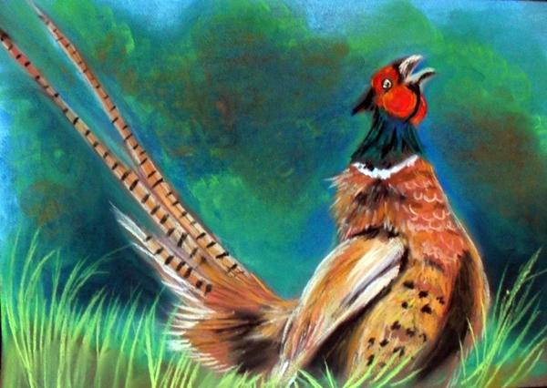 Pheasant 3 by Tomek3618
