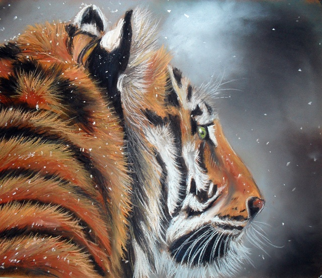 Tiger by Tomek3618