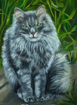My cat Atos