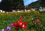 Spring comes to Ephesus