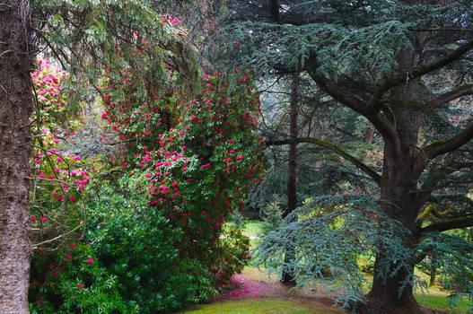 Ireland - in the Powerscourt's park