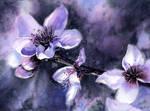 Spring Flowers - Almond
