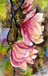 Spring Flowers - Magnolia
