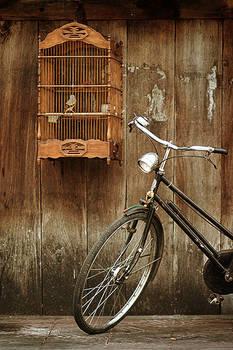 bird and bike
