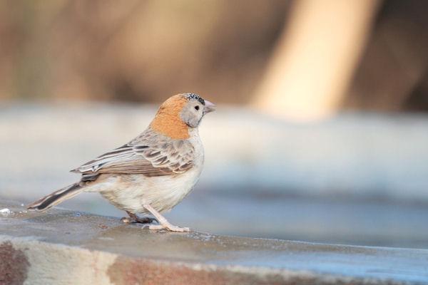 Little Bird by FSGPhotography