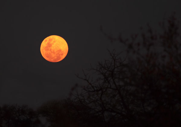 The Moon Was Orange by FSGPhotography