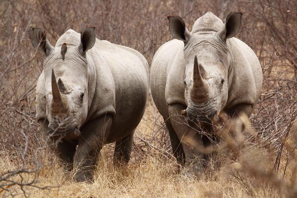 Rhinos by FSGPhotography