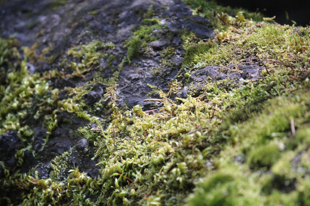 Moss of Life by Stargazer96