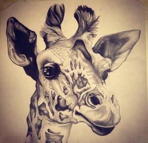Giraffe by Sophie-Gibson